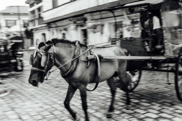 horse in vigan ilocos sur
